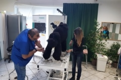 DGV-Workshoptraining + EGA Mastergroomerprüfung mit Umberto Lehmann 19.10.2019